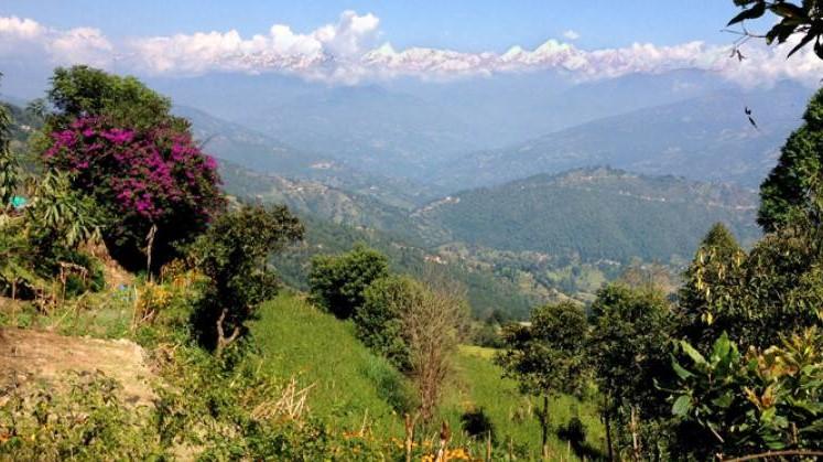Nepal - Tibetanska festligheter i rhododendronblomningens tid
